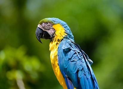 parrot-island